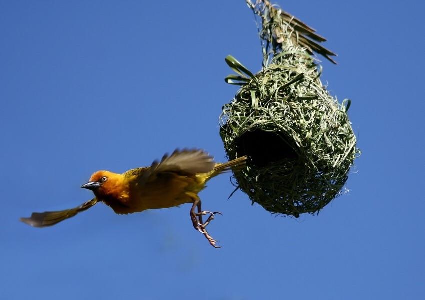 She's Leaving the Nest!